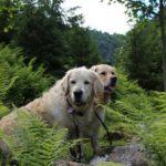 Cooper und Pearl