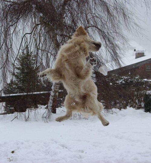 Cooper beim Schneeball fangen