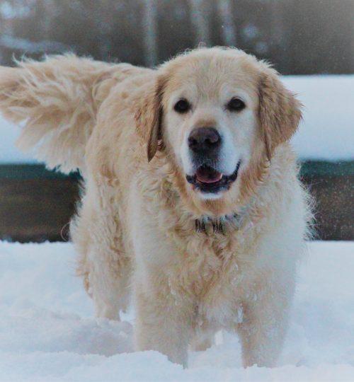 Nahaufnahme Cooper im Schnee